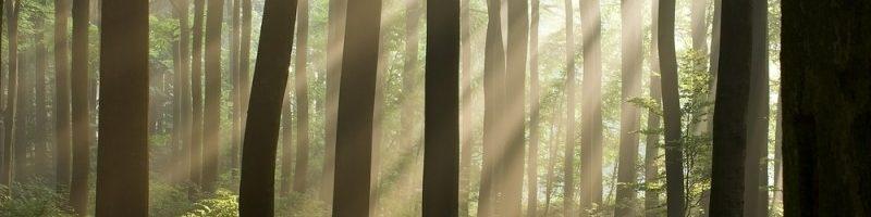 sun_trees